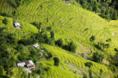 aerial view of beautiful rice terraces on mountain slopes in sikkim india