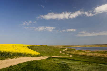 winding road near rape field and lake with clear sky photo