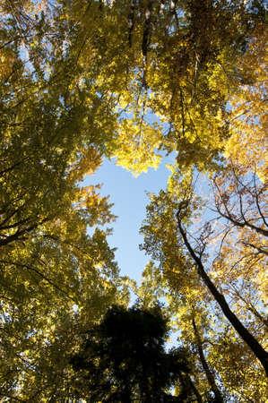 fall autumn colored forest foliage photo