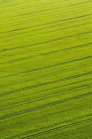 aerial view of green crops with tractor tracks