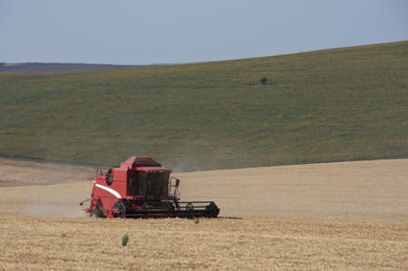 red combine harvesting a  wheat field