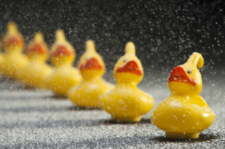 row of yellow rubber ducks in snow flakes with shallow depth of field Stock Photo - 15679335