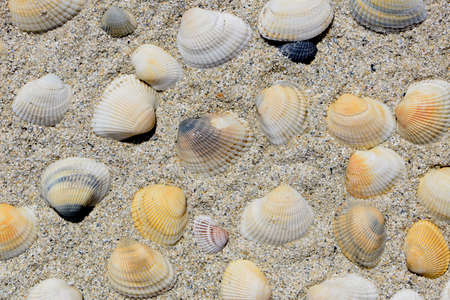 cluster: cluster of colorful seashells in beach sand