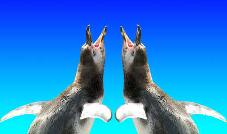 squeal: two pinguins
