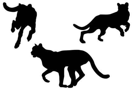 Cheetah silhouettes photo