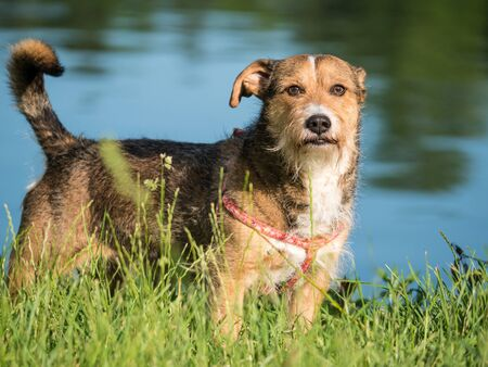 Beautifull mixed breed or cross breed dog in a park with water in the background