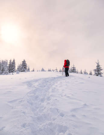 Hiker on a trail walking through snow. Winter landscape in Carapathian Mountains, Romania. Фото со стока