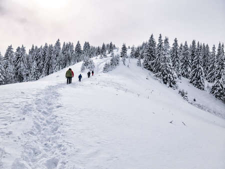 Hikers on a trail walking through snow. Winter landscape in Carapathian Mountains, Romania.