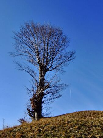eminence: Solitude tree with a plane