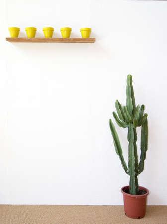 little yellow pots and a huge cactus by a white wall photo