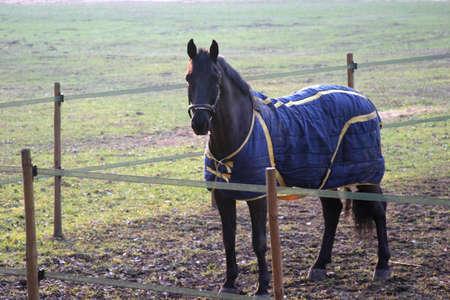 horse in winter wearing coat photo