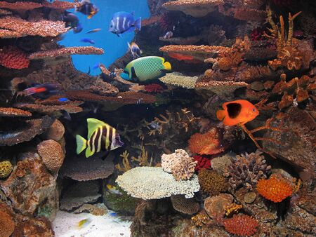 marine fish: fish in the aquarium