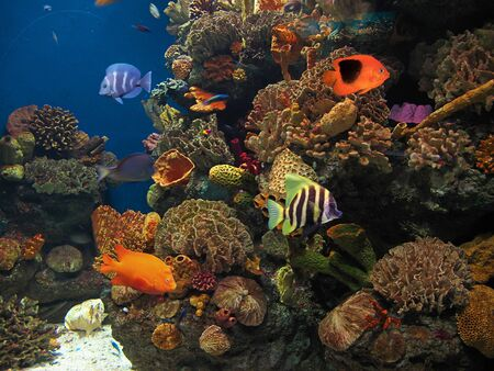 marine environment: bottom of the sea with fish Stock Photo