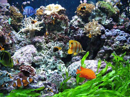 tropical tank: fish in the sea