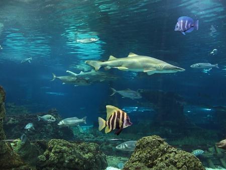 fish in the aquarium                                Stock Photo - 10310571