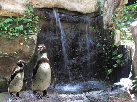 penguin Stock Photo - 10320389