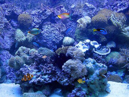aquarium Stock Photo - 10320391