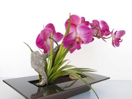 indoor decorative plant Stock Photo