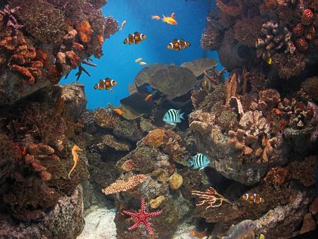 fish in the aquarium Stock Photo - 10818352