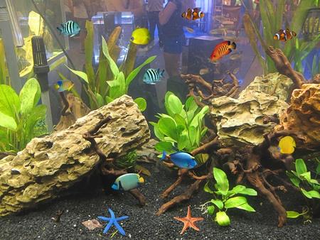 fish in the tank Stock Photo - 11267630