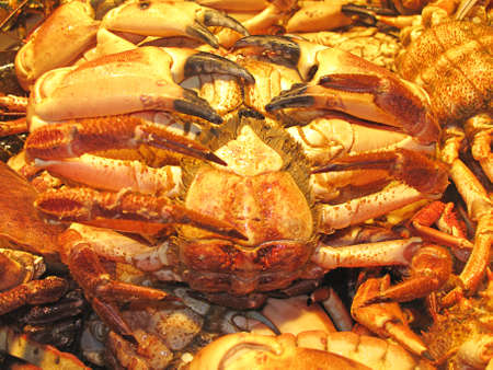 crab Stock Photo - 11835362