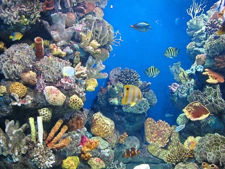aquarium Stock Photo - 11835367