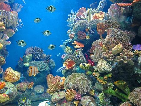 aquarium                               Stock Photo - 11932955