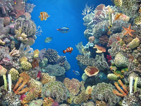 aquarium                                Stock Photo - 12730257