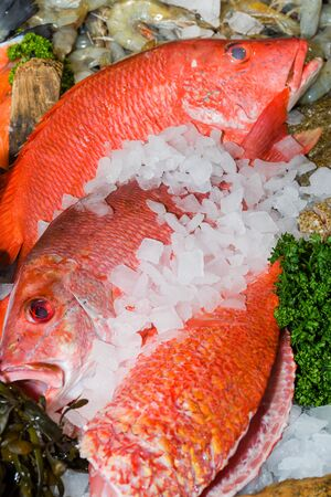 Fresh seafood on ice at the market Standard-Bild