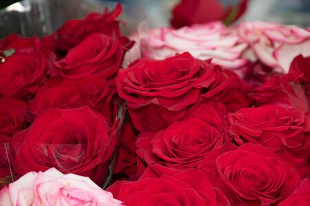Flowers at the flower market, Bouquet arrangement ideal for celebration like Mother's Day, Woman's Day, Valentine's Day, birthday