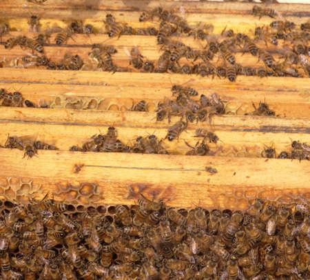 internal of apiary Stock Photo