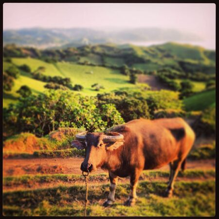 rolling hills: Rolling Hills, Batanes Philippines Stock Photo