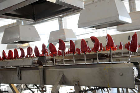 bell pepper: Red bell pepper on the processing line Stock Photo