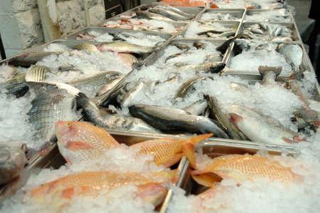 Fresh fish on the market stall in Tel-aviv