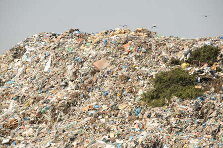 dump yard: Disposal of waste materials in a garbage dump