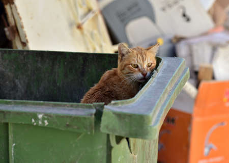 stray: Stray cat in the garbage bin