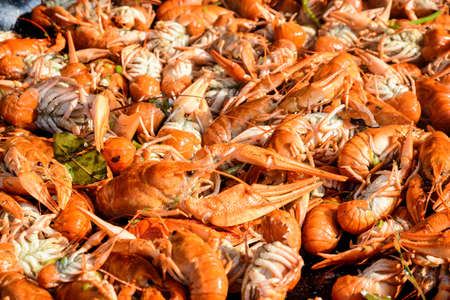 Freshly cooked European crayfishes Astacus astacus(noble or broad-fingered crayfish, the most common species of crayfish in Europe) with spices displayed for sale at a street food festival 스톡 콘텐츠