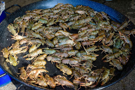 Living raw European crayfishes Astacus astacus (noble or broad-fingered crayfish, the most common species of crayfish in Europe) in a pan ready to be cooked at a street food festival, seafood 스톡 콘텐츠