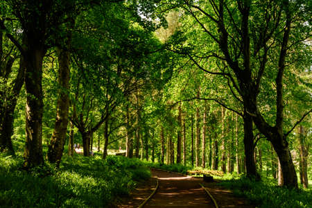Empty leading path in a forest with old green trees and leaves in a summer day in Scotland, United Kingdom
