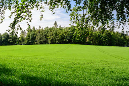 Minimalist landscape with line with green trees and grass in a sunny day in Scotland, United Kingdom, with space for text