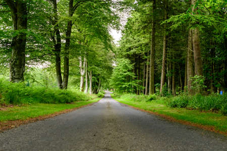 Empty leading asphalt road with big green trees and ferns on the sides, in a summer day in Scotland, United Kingdom