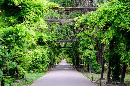 Minimalist garden landscape with linden trees and green leaves near a grey alley in a sunny summer day in Cismigiu Garden in Bucharest, Romania Foto de archivo