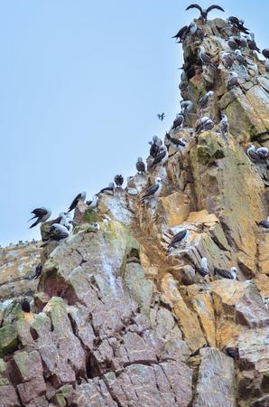 Birds gang