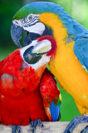 Macaws love