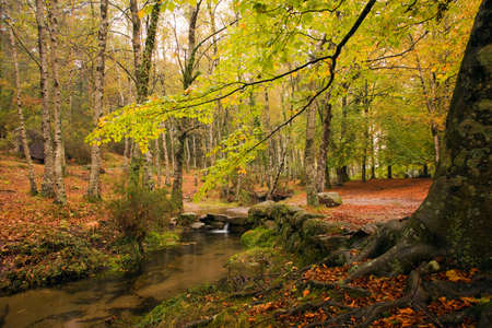 Small river in the portuguese national park of Geres in beautiful Autumn colors, Portugal 免版税图像
