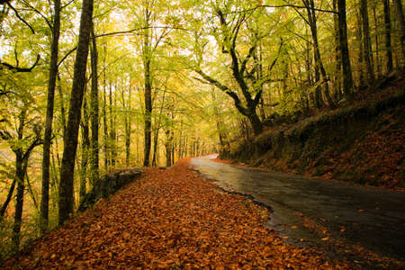 Rain in the forest at the portuguese national park of Geres in beautiful Autumn colors, Portugal 免版税图像