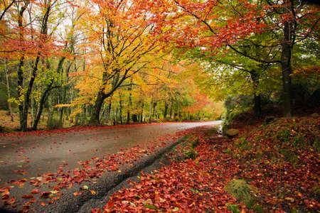 horizontal: Road in autumn wood at Mata da Albergaria, Geres National Park, Portugal