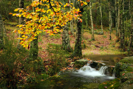 Small autumn river at Geres National Park, north of Portugal 免版税图像