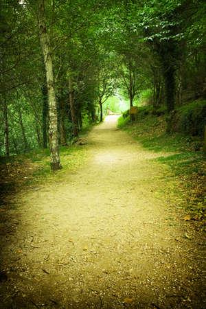 forest path 免版税图像