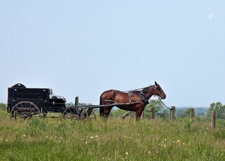 Amish horse and buggy tied to fence